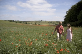 Field of poppies in Turville
